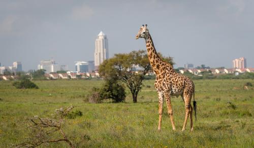 ナイロビ国立公園