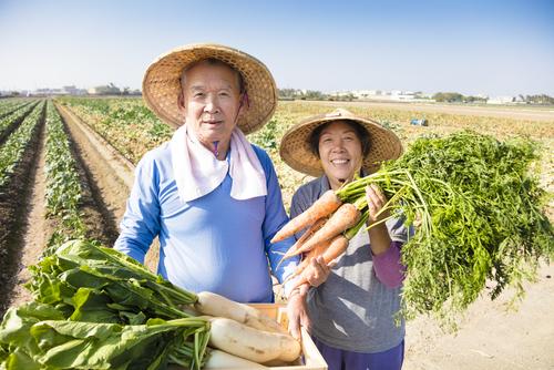 農家の夫婦と野菜