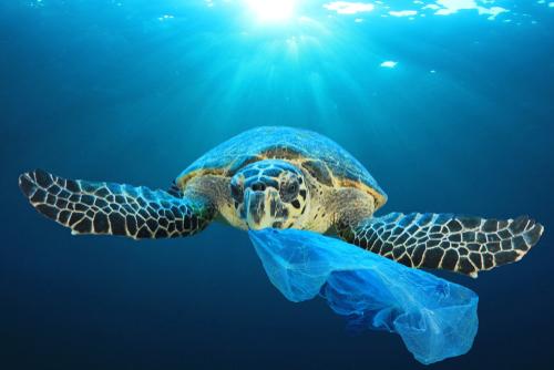 プラスチックバッグを咥えるウミガメ