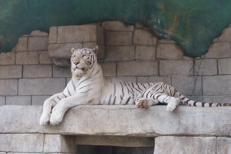 東武動物公園1